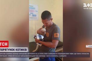 Новости мира: в Таиланде береговая охрана спасла 4 котов из поврежденной лодки