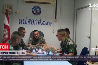 Новости мира: в Таиланде база военно-морских сил приютила четырех котиков