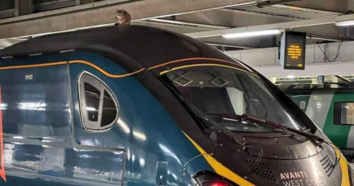 У Лондоні кішка затримала відправлення швидкісного поїзда на дві години