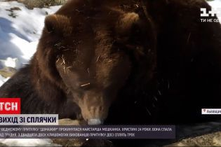 Новости Украины: в медвежьем приюте Львовской области проснулась самая старшая медведица