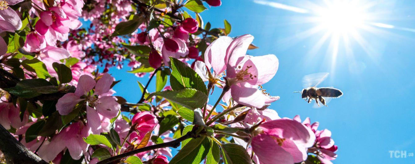 Для натхнення та душі: поезія про весну