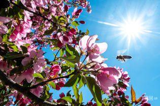 Для вдохновения и души: поэзия о весне