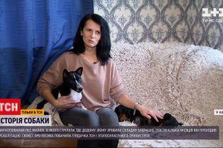 Новини України: паралізований песик Малюк знайшов собі нову власницю