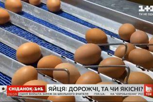 Купить яйца и не отравиться: как цена влияет на качество продукта