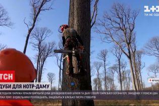 Новости мира: для реконструкции Нотр-Дама начали вырубку столетних дубов