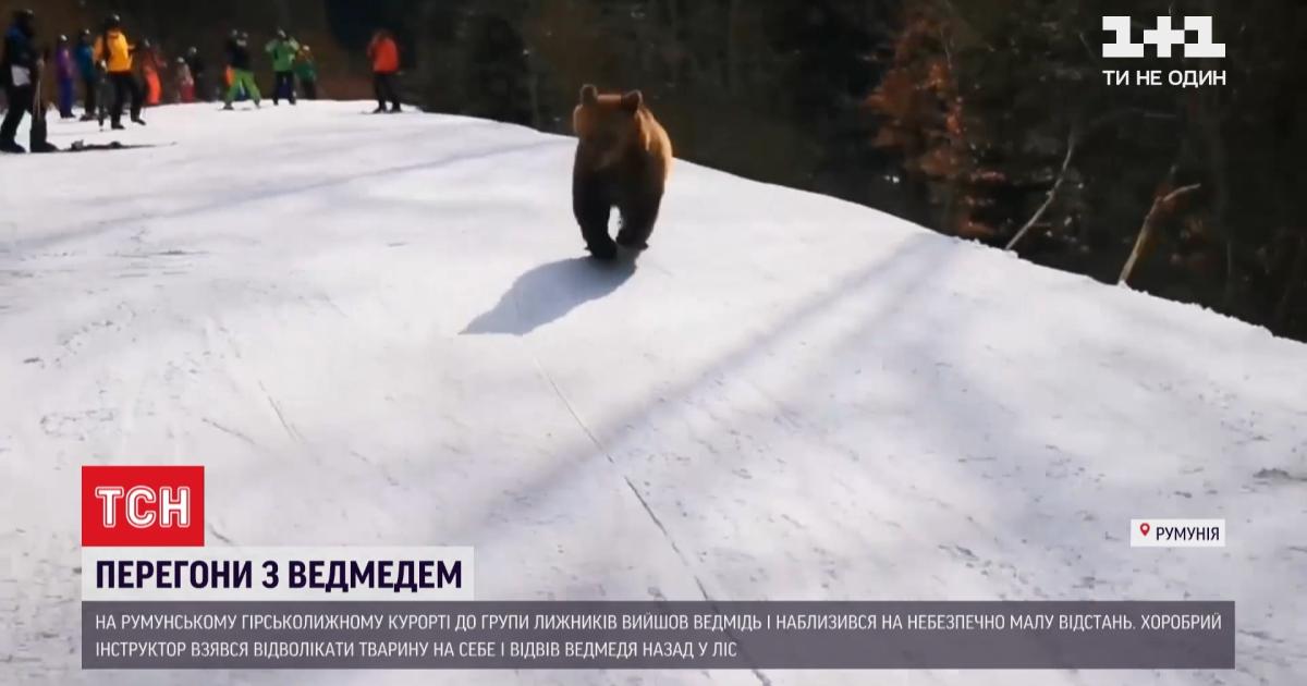 Медведь вышел из леса и напугал лыжников на горнолыжном курорте в Румынии
