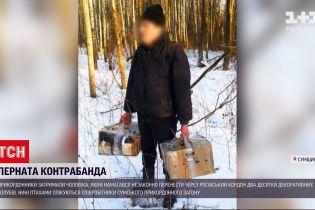 Новини України: у Сумській області затримали чоловіка, який намагався принести з Росії 20 декоративних голубів