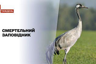 """Новини тижня: в """"Асканії Новій"""" у муках помирають тисячі червонокнижних птахів"""