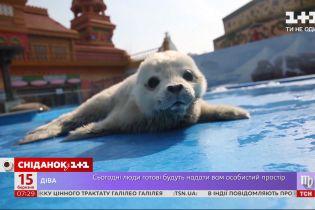 Международный день защиты бельков: интересные факты о детенышах гренландского тюленя
