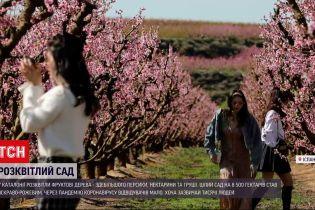 Новости мира: в испанской Каталонии расцвели тысячи фруктовых деревьев