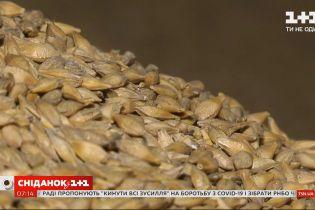 Снизился экспорт украинского зерна — Экономические новости