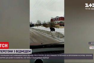 Новини світу: у Росії ведмідь бігав за пішоходами вулицями міста