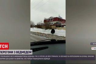 Новини світу: у Росії просто на пішохідному переході автобус збив ведмедя