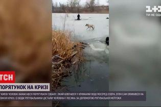 Новини України: у Києві чоловік ледь не потонув під час порятунку собаки