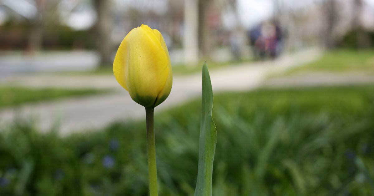 Прогноз погоды на 22 апреля: в Украине будет прохладно, местами — дожди