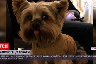 Новини України: у Львові конфіскують собаку, яка загризла йоркширського тер'єра