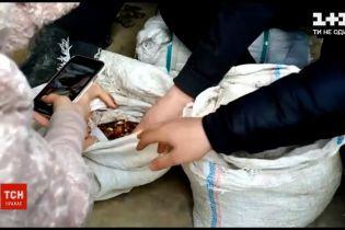Новини України: житель Рівненської області незаконно перевозив бурштин за кордон