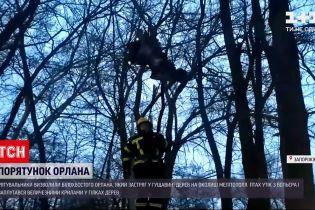 Новости Украины: в Мелитополе спасли орлана, который застрял в гуще