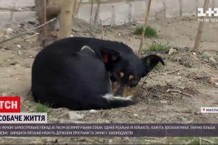 Новини України: як вирішити проблему безпритульних собак на вулицях країни