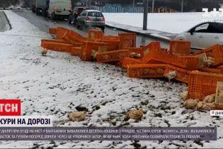 У Дніпрі з вантажівки випали десятки кошиків з птицею