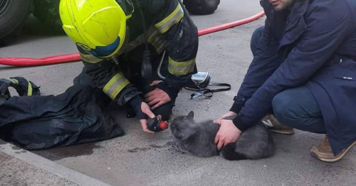 В Киеве во время пожара спасли кота, который лежал без сознания на диване