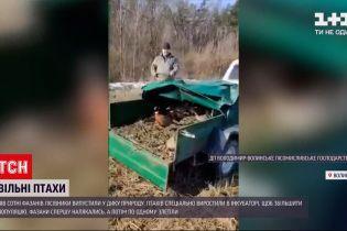 Новости Украины: на Волыни полсотни фазанов выпустили в дикую природу