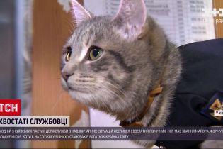 Новини України: у столичній ДСНС оселився кіт-майор