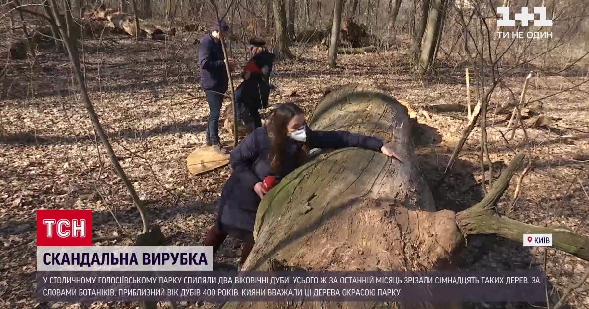 """""""І так мало місць таких, а вони ще й це добивають"""": як кияни реагують на вирубку вікових дубів у Голосіївському парку"""