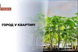 Новини тижня: чи легко виростити мікрозелень в квартирі і як на такому фермерстві заробити гроші