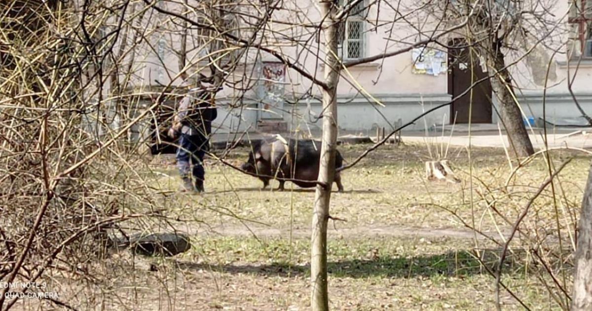 В Киеве на прогулке заметили необычного домашнего любимца: видео