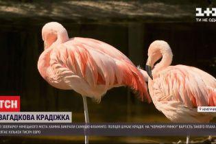 Новости мира: из зоопарка немецкого города Хамма похитили самку фламинго