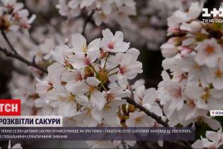 Новини світу: вперше за понад тисячу років цвітіння сакури в Японії почалось раніше на 3 тижні