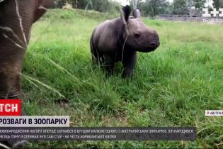 Новини світу: в австралійському зоопарку носоріг уперше скупався в калюжі бруду