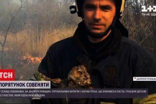 Новини України: вогнеборці врятували совеня із запаленого сухостою