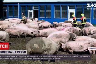 Новини України: у Німеччині пожежники гасили ферму і тепер не знають, куди подіти тварин
