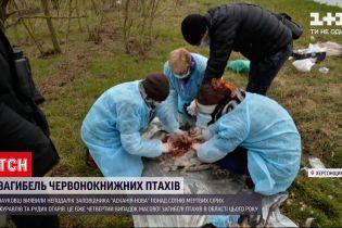 """Новини України: неподалік заповідника """"Асканія-Нова"""" знайшли понад сотню мертвих птахів"""