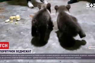 Новини світу: у Румунії фермер під своїм будинком знайшов двох малюків ведмежат