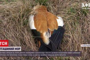"""Новини України: поблизу заповідника """"Асканія-Нова"""" знайшли 50 отруєних птахів"""