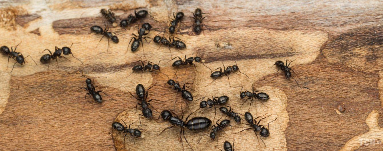 Как избавиться от муравьев на плодовых деревьях и в почве