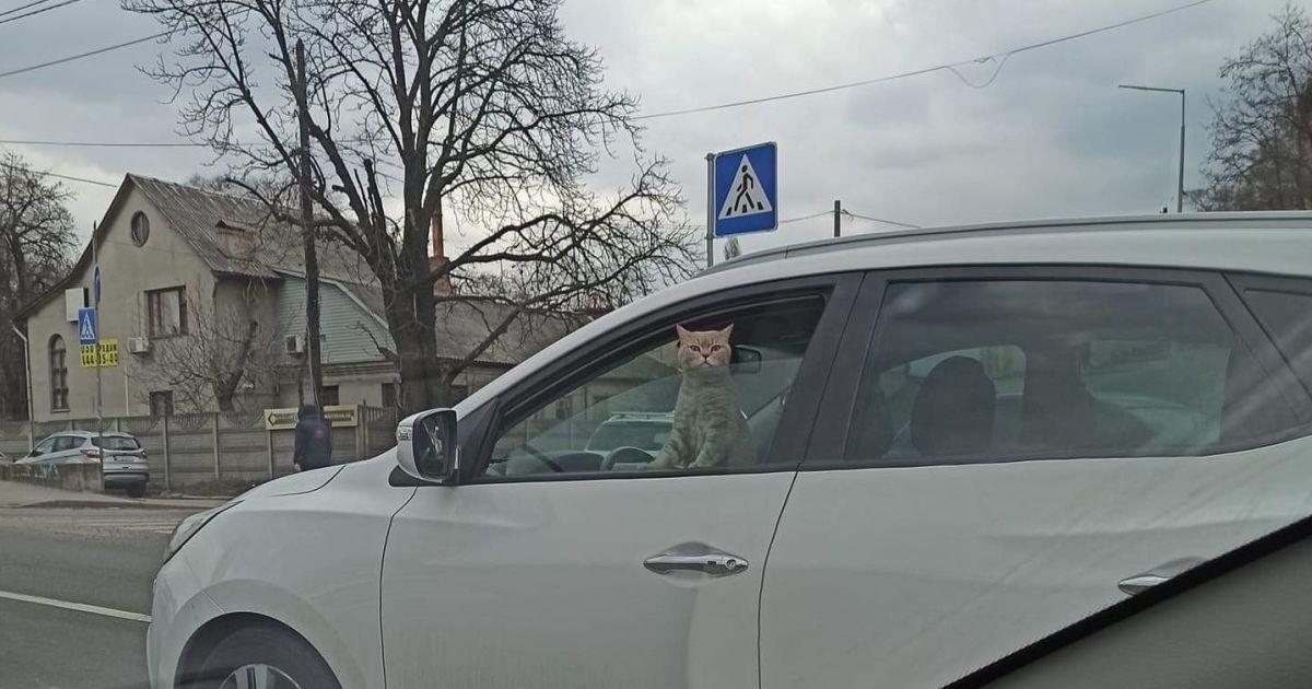 В Киеве в одной из пробок заметили автомобиль с котом за рулем