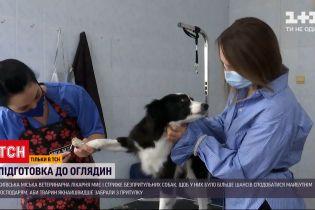 Новости Украины: бездомных собак отмыли и постригли, чтобы найти им хозяев