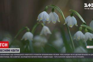 Новини України: у бодсаду Чернівецького університету розквітли червонокнижні рослини