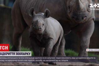 Новини світу: у британському зоопарку міста Честер готуються до відкриття після карантину
