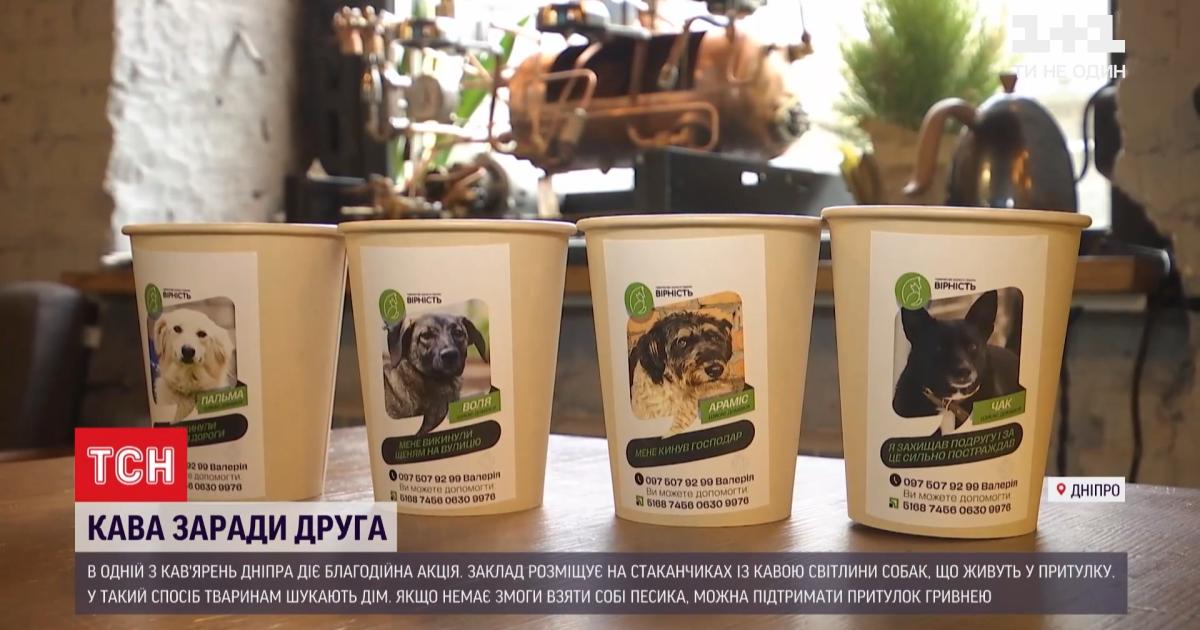 У Дніпрі кав'ярня на своїх чашках рекламує собак із притулку, які шукають господарів