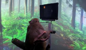 """Стартап Ілона Маска показав чиповану мавпу, яка """"силою думки"""" грає у відеогру"""