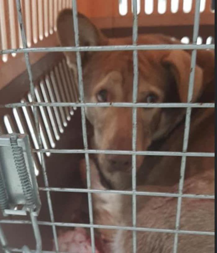 Під Києвом житель Бучі застрелив безпритульного собаку