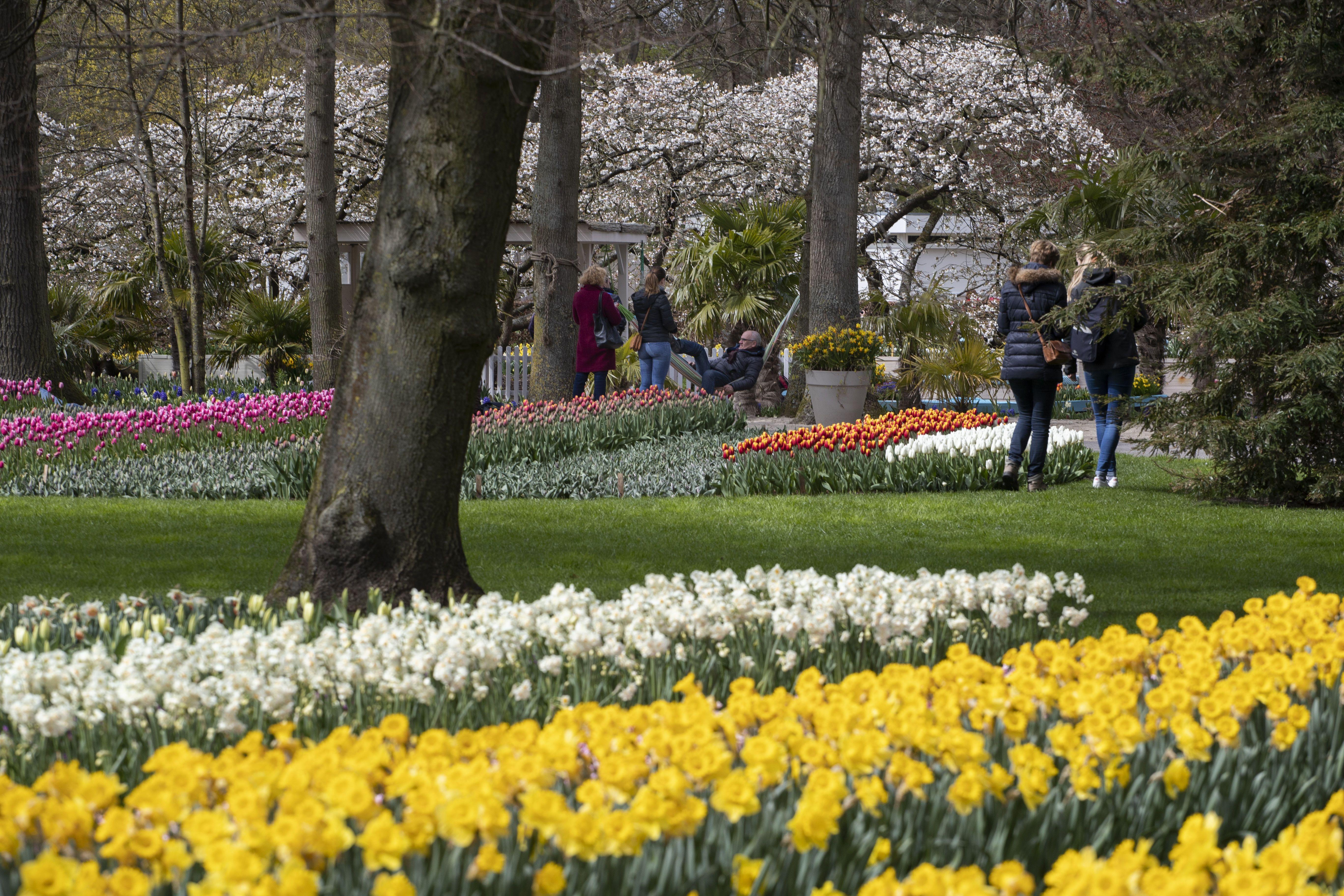 тюльпани в парку Кекенхоф_2
