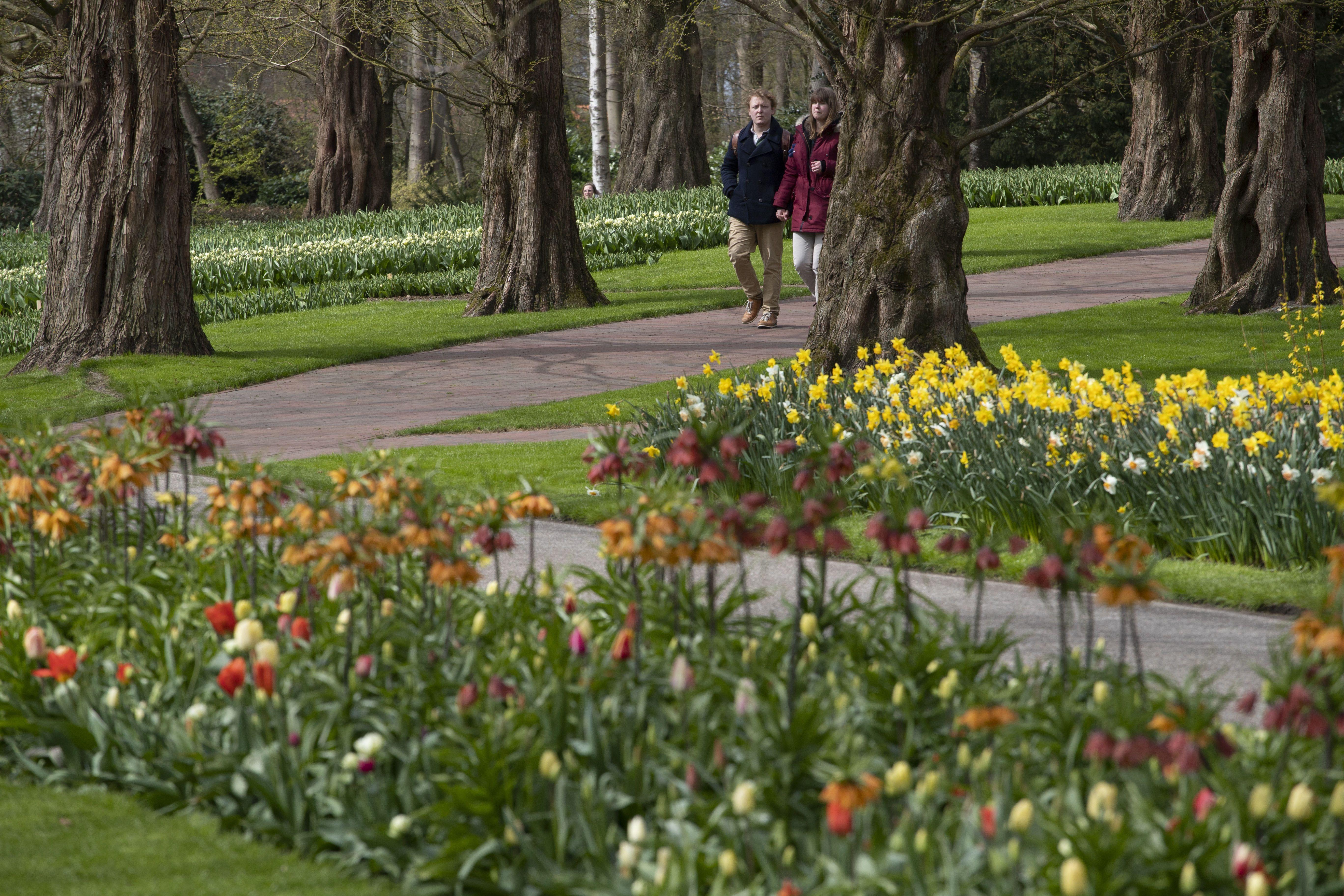 тюльпани в парку Кекенхоф_4