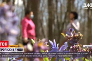 Новости Украины: кто и как пытается уберечь подснежники от уничтожения в украинских лесах