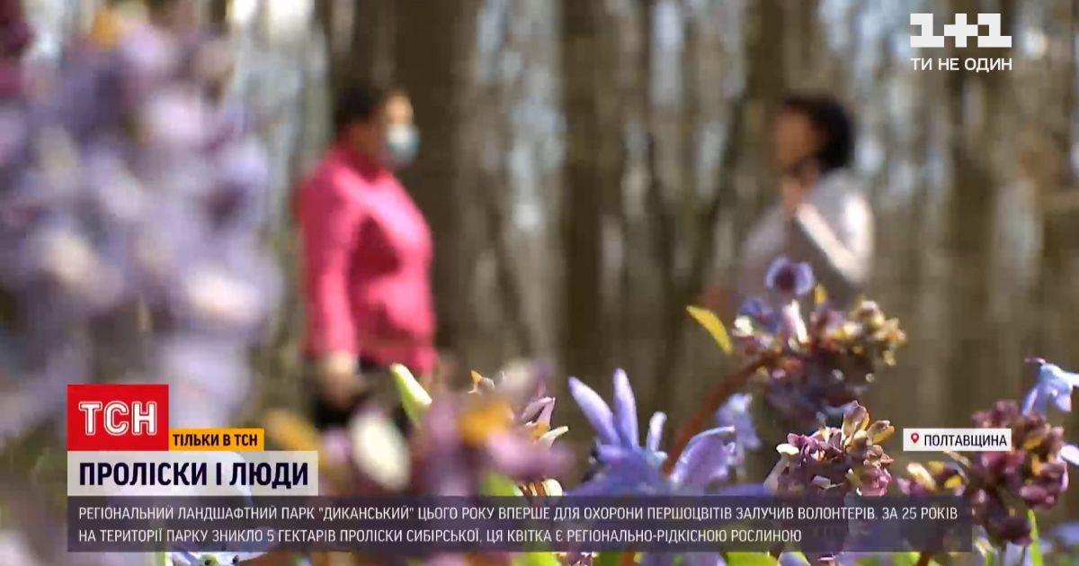 Уничтожение подснежников в украинских парках: кто и как уберегает первоцветы